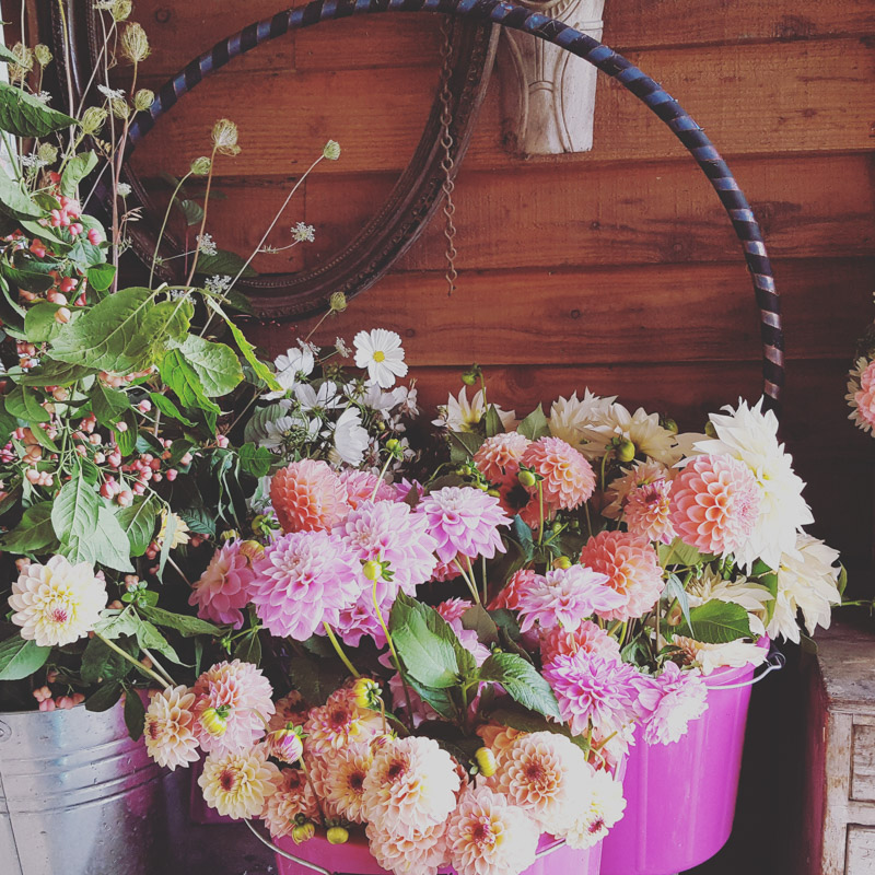 photo of flowers in pink buckets