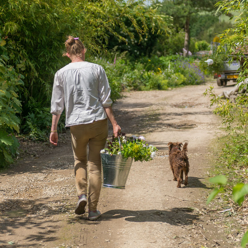 Photo of a florist in Watlington picking flowers with her dog as companion