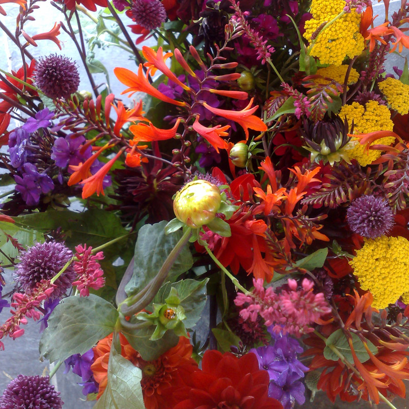 Photo of yellow and red flowers, Oxfordshire Florist with online shop