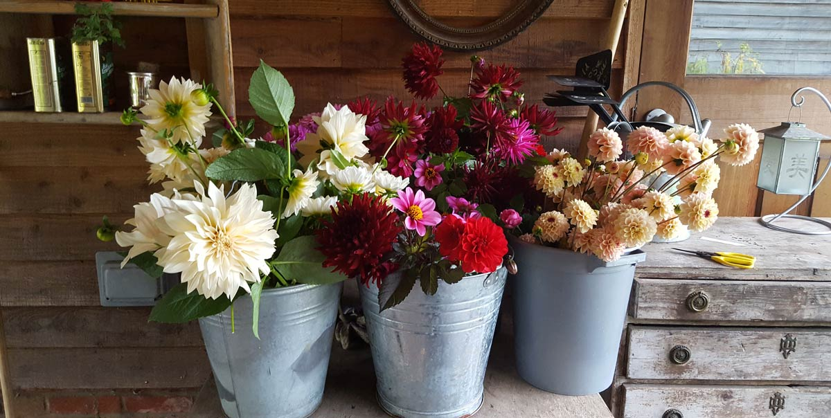Photograph of three buckets of flowers